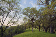 Trees growing in grassy field - MINF12138
