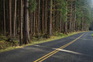 Forest trees along rural road - MINF12141