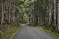 Trees and forest lining rural road - MINF12144