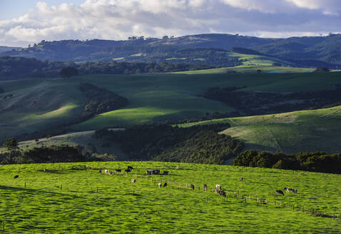 Beautiful scenery in the hinterland of Northland, North Island, New Zealand - RUNF02698