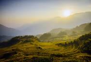 Rice fields in rural landscape - MINF12471