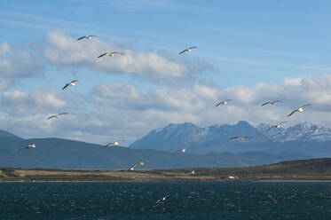 Seagulls in the harbour of Ushuaia, Tierra del Fuego, Argentina, South America - RUNF02791