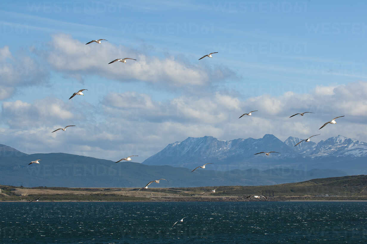 Seagulls in the harbour of Ushuaia, Tierra del Fuego, Argentina, South America - RUNF02791 - Michael Runkel/Westend61