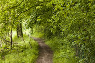 Footpath through forest - TCF06112
