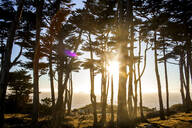 Silhouette of trees along coastline - BLEF07701