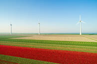 Wind turbines on dyke, fields with tulips in the foreground, elevated view, Top, Flevoland, Netherlands - CUF51616