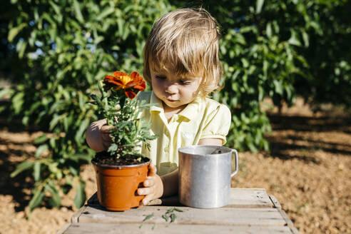 Spain, Tarragona. Little girl transplanting an ornamental flower in the garden of her house. - JRFF03404