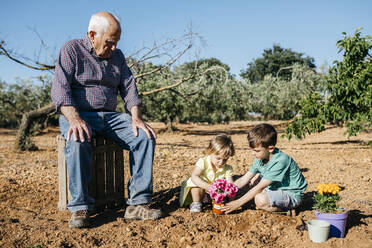Grandfather and grandchildren planting a flower in the garden - JRFF03407