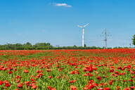 Poppy field with wind wheel and pylon in the background, Germany - FRF00847