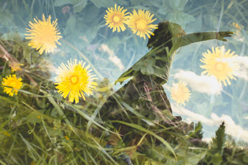 A girl merged in a double exposion with a shot of dandelion field, Hamburg, DE - IHF00147