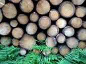 Holzstruktur,Germany - JTF01254