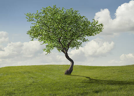 Tree growing in rural landscape - BLEF07979