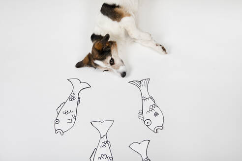 Mongrel with drawn fishes on white ground - PSTF00436