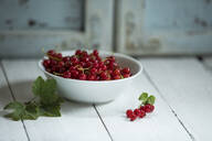 Close up of bowl withcurrants (Ribes rubrum) - MAEF12900