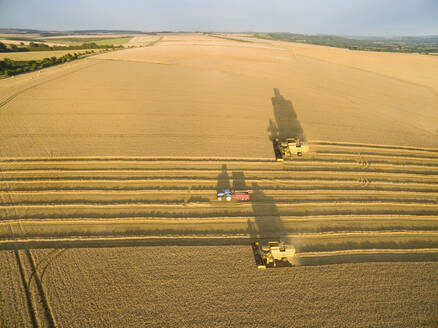 Aerial view combine harvesters and tractor trailer in sunny barley field - JUIF01972