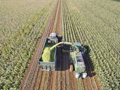 Aerial view of tractor filling trailer with harvested maize in sunny field - JUIF01990