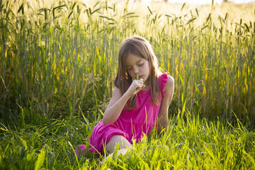 Portrait of young girl wearing vibrant pink dress sitting in front of rye field in summer - LVF08135