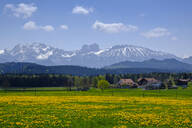 Yellow countryside meadow with village houses andAlpsin background, Seeg, Bavaria, Germany - LBF02608