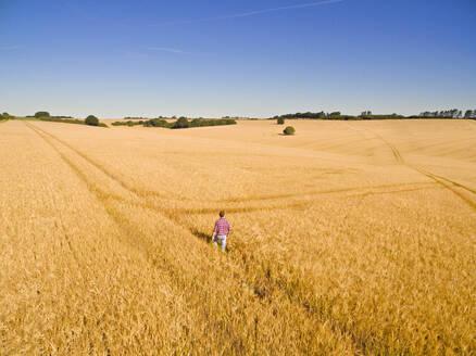 Aerial view of farmer walking in sunny golden barley field - JUIF02046