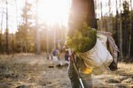 Volunteers planting trees in sunny woods - HEROF37156