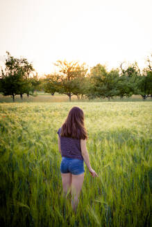 Rear view of teenage girl standing in oat field at sunset - LVF08169
