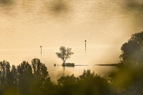 Germany, Baden-Wurttemberg, Lake Constance and trees in fog at sunrise - SHF02203