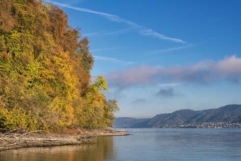 Deutschland, Baden-Württemberg, Bodensee, Wallhausen, Herbstliches Bodanrueckufer - SHF02206