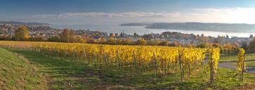 Germany, Baden-Wurttemberg, Uberlingen, Vineyard in Autumn, Lake Constance in background - SHF02215