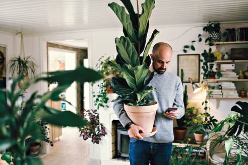 Man holding potted plant while text messaging on smart phone at home - MASF13249