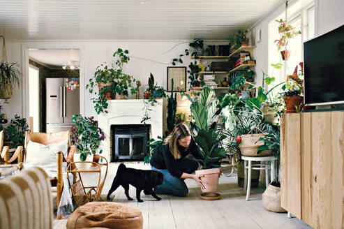 Full length of woman crouching by pug while positioning potted plant on plate in room at home - MASF13252