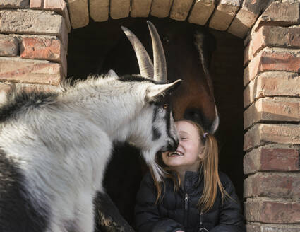Happy girl with goat and horse in barn window - FSIF04238