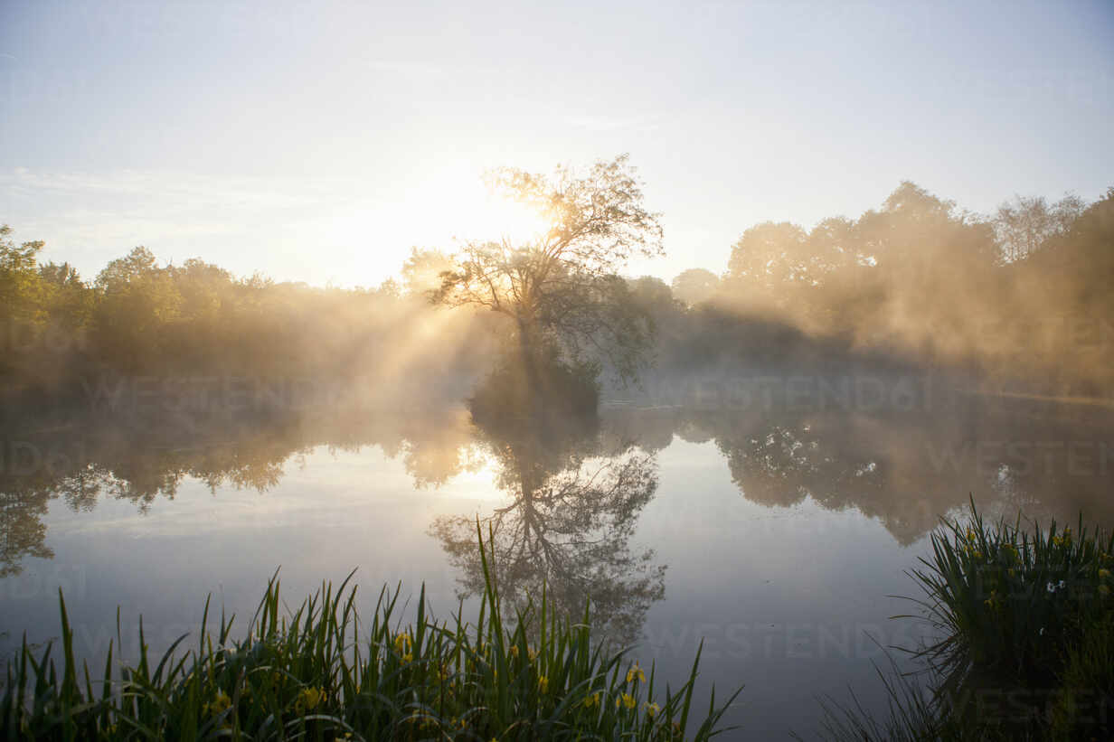Tranquil misty lake and trees at sunrise - JUIF02439 - Ian Lishman/Westend61
