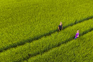 Two women in a field, aerial view - STSF02109