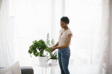 Woman arranging plants at home - SODF00026