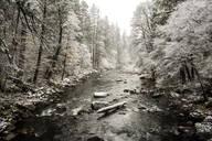 Stream flowing in snowy forest - BLEF10634