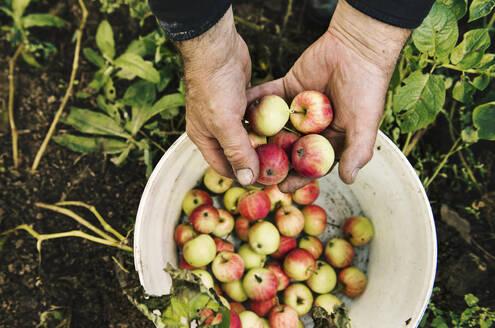 Caucasian farmer holding fruit - BLEF10658