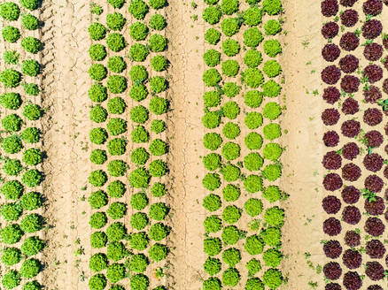 Abstract aerial view of lettuce agriculture in Correze, France. - AAEF00081