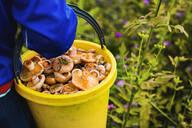 Gardener gathering mushrooms in bucket - BLEF11379