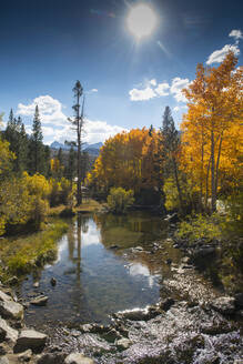 Autumn trees and remote lake - BLEF11382