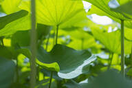 Close up of tropical plants - BLEF11613