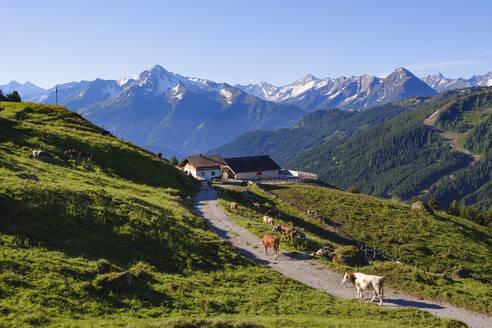 Bergbauernhof an der Zillertaler Höhenstraße über Hippach, hinten Ahornspitzespitze und Dristner in Zillertaler Alpen, Zillertal, Tirol, Österreich - SIEF08790