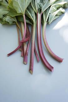 Rhubarb - GISF00438