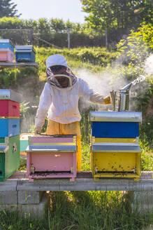 Italy, Tuscany, Arezzo, Beekeeper - MGIF00591