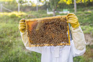 Beekeeper checking frame with honeybees - MGIF00600