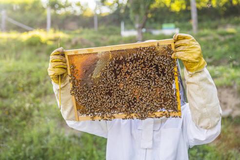 Italy, Tuscany, Arezzo, Beekeeper - MGIF00600