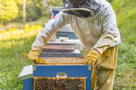 Beekeeper checking frame with honeybees - MGIF00606