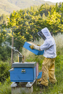 Beekeeper with honeycombs and smoker - MGIF00621