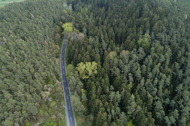 Aerial view of road through forest, Franconia, Bavaria, Germany - RUEF02268
