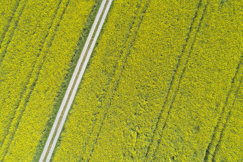 Aerial view of dirt road through oilseed rape agricultural fields, Franconia, Bavaria, Germany - RUEF02277
