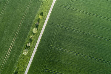 Aerial view of treelined road through agricultural fields Franconia, Bavaria, Germany - RUEF02280